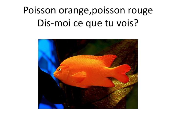 Poisson orange,poisson rouge