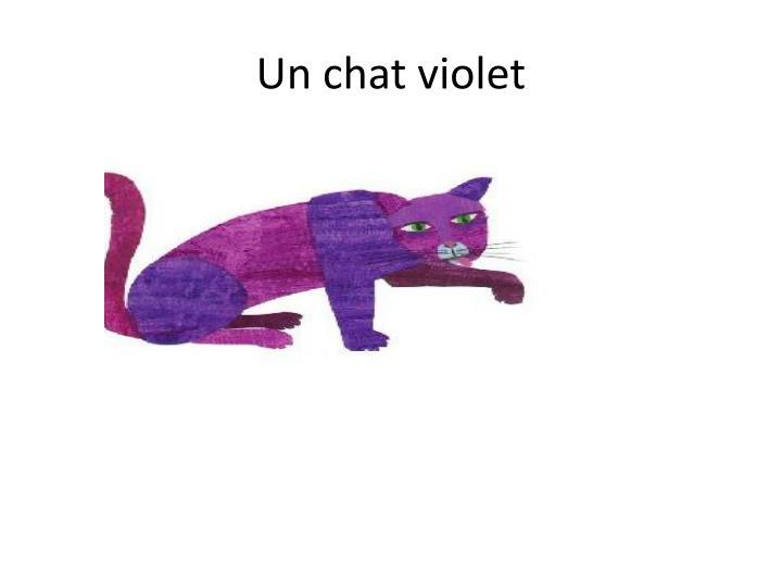 Un chat violet
