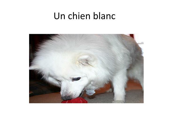 Un chien blanc