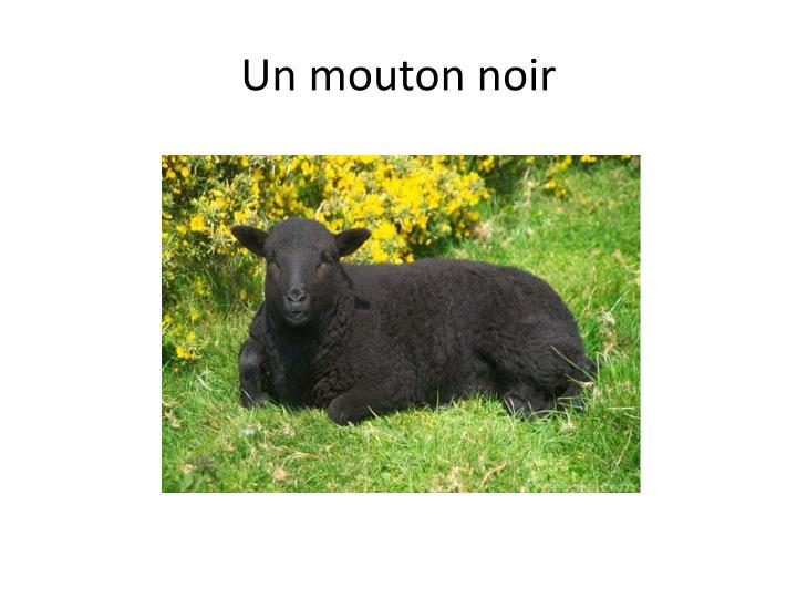 Un mouton noir