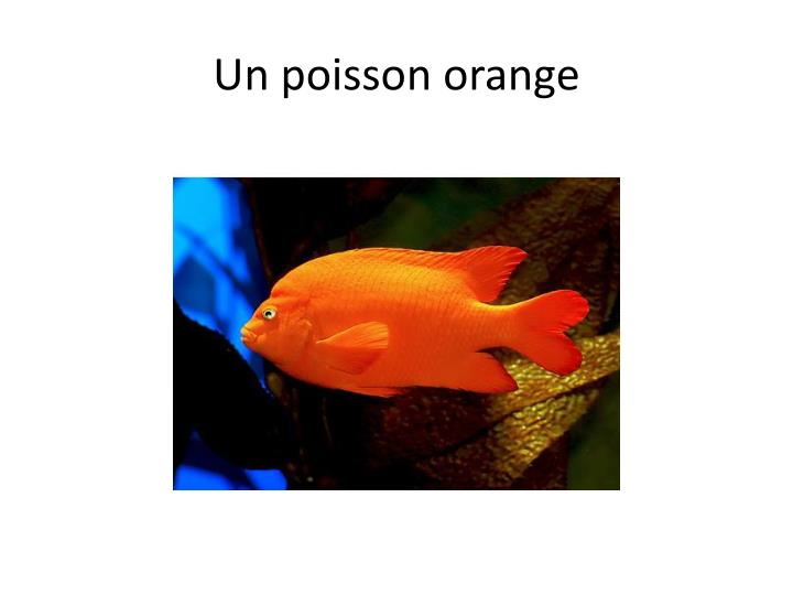 Un poisson orange