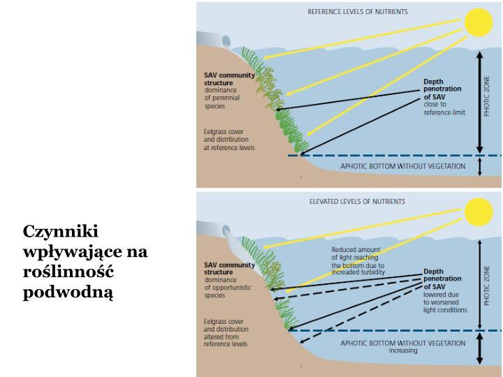 Czynniki wpływające na roślinność podwodną