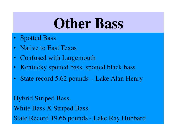 Other Bass