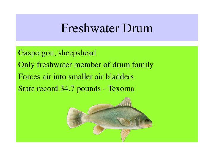 Freshwater Drum