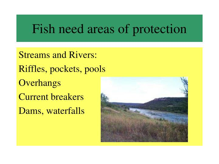 Fish need areas of protection