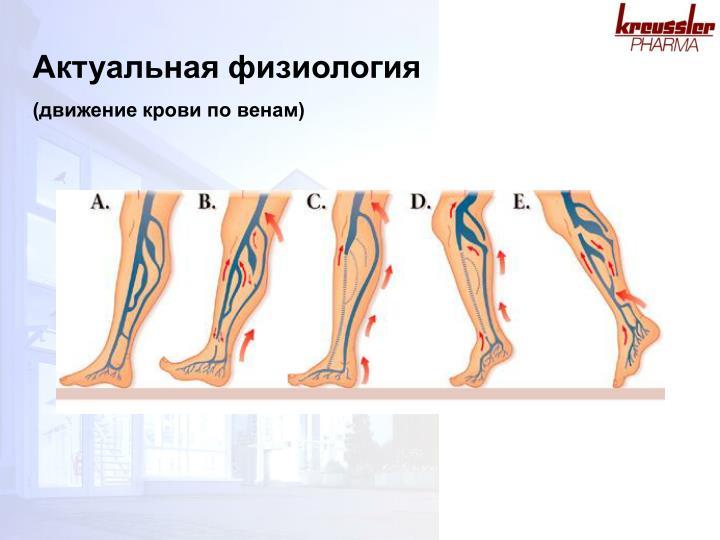 Актуальная физиология