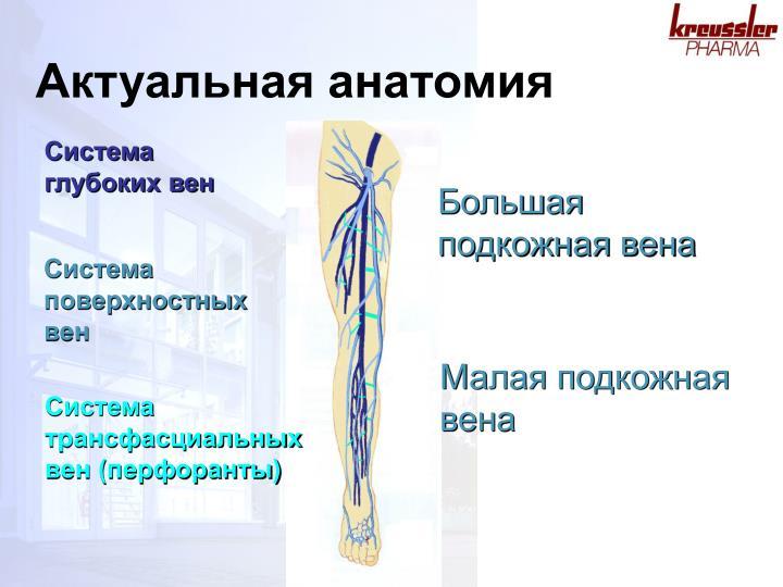 Актуальная анатомия