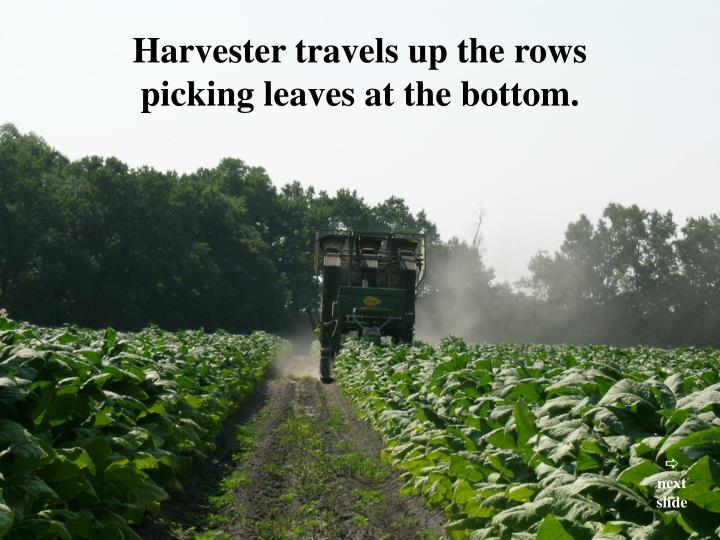 Harvester travels up the rows