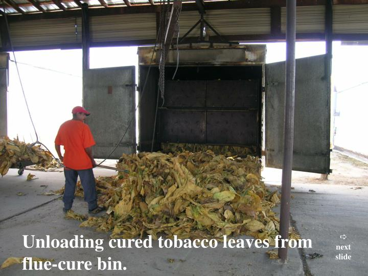 Unloading cured tobacco leaves from