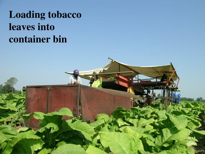 Loading tobacco leaves into container bin