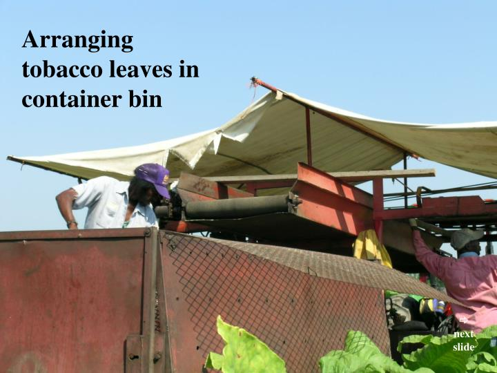 Arranging tobacco leaves in container bin