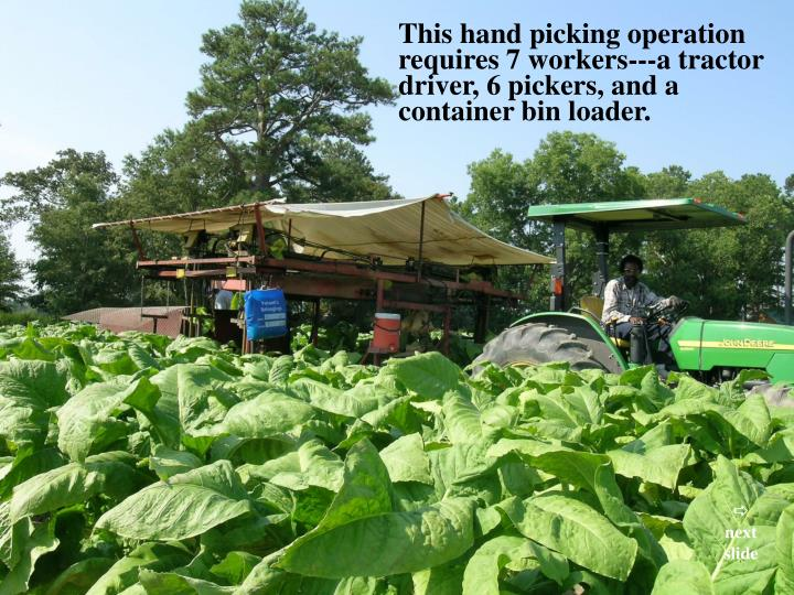 This hand picking operation requires 7 workers---a tractor driver, 6 pickers, and a container bin loader.