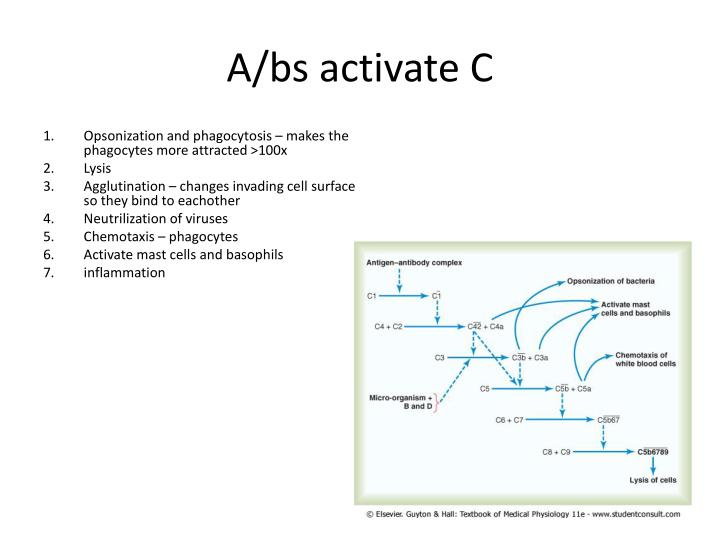A/bs activate C