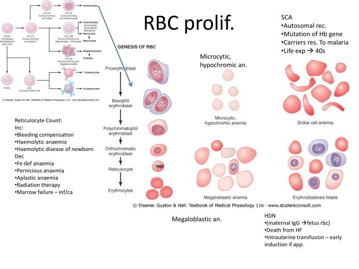 RBC prolif.