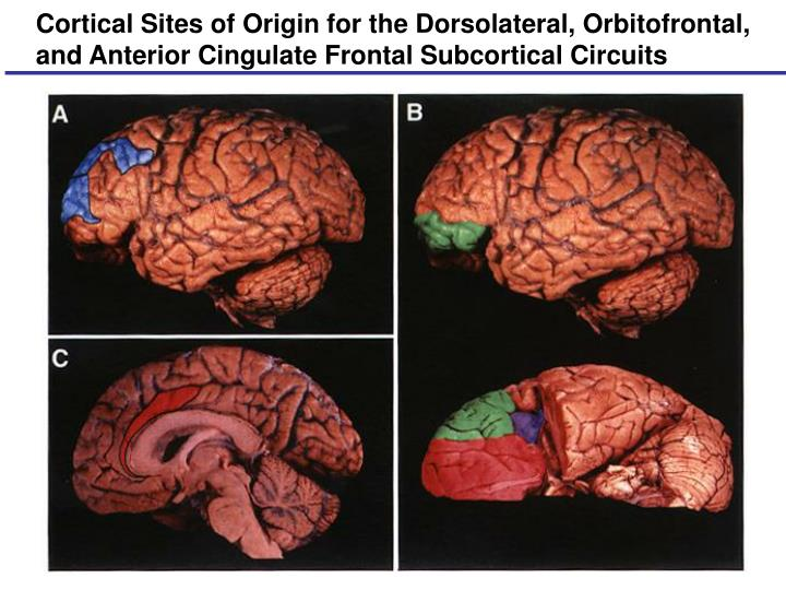 Cortical Sites of Origin for the Dorsolateral, Orbitofrontal, and Anterior Cingulate Frontal Subcortical Circuits