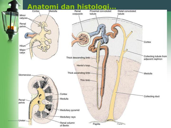 Anatomi dan histologi…