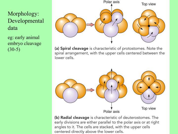 Morphology: Developmental data