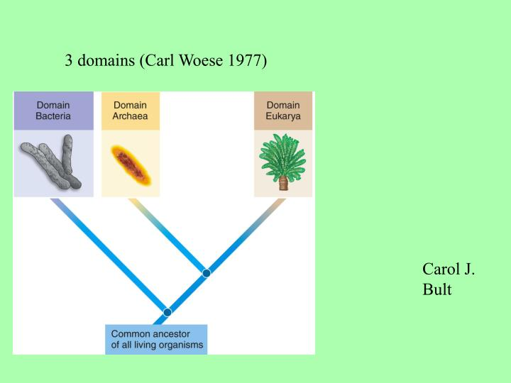 3 domains (Carl Woese 1977)