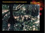 sistem perakaran mangrove akar lutut akar tunjang pneumatofor akar napas