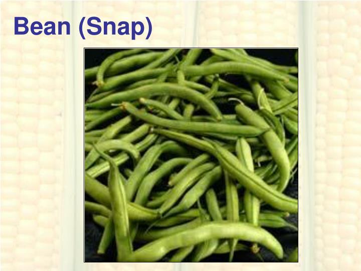 Bean (Snap)
