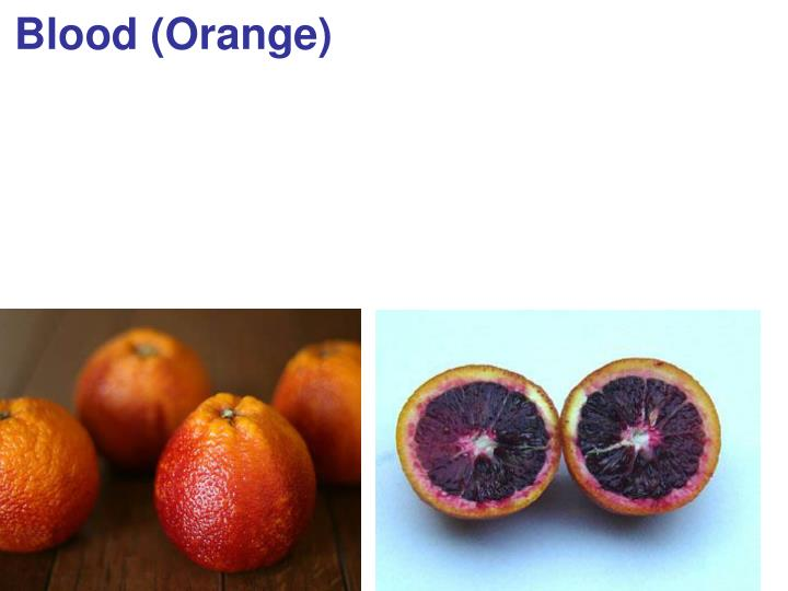 Blood (Orange)