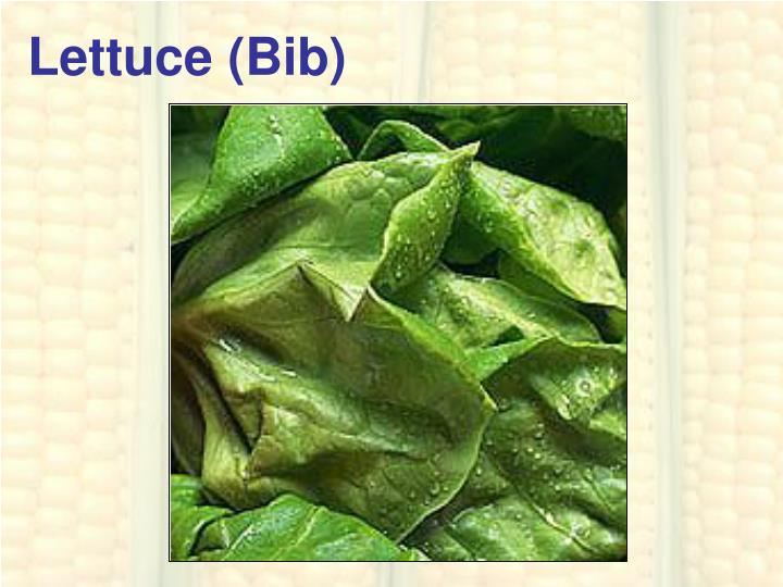 Lettuce (Bib)