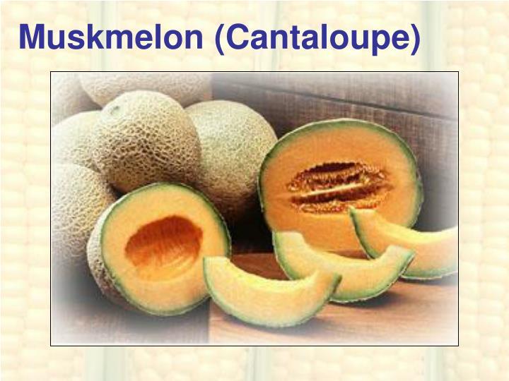 Muskmelon (Cantaloupe)