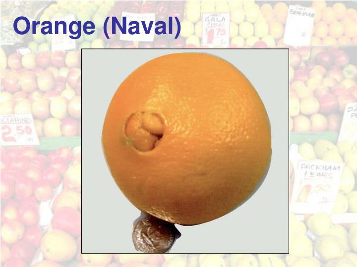 Orange (Naval)