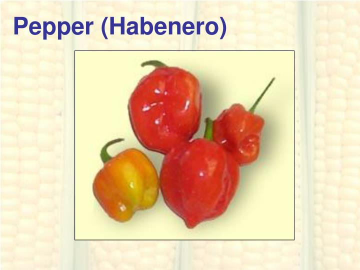 Pepper (Habenero)