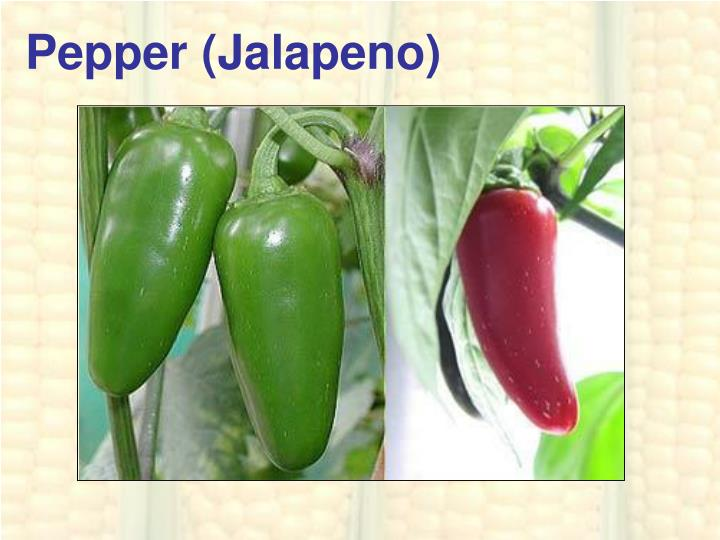 Pepper (Jalapeno)