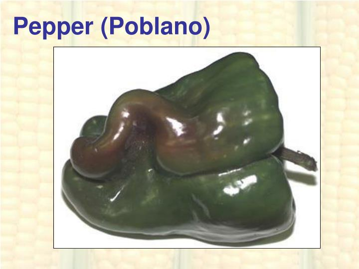 Pepper (Poblano)