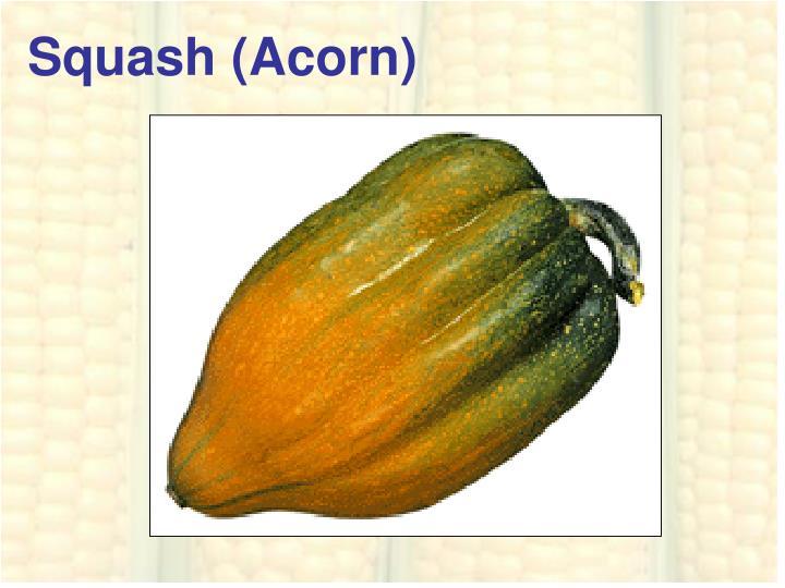 Squash (Acorn)