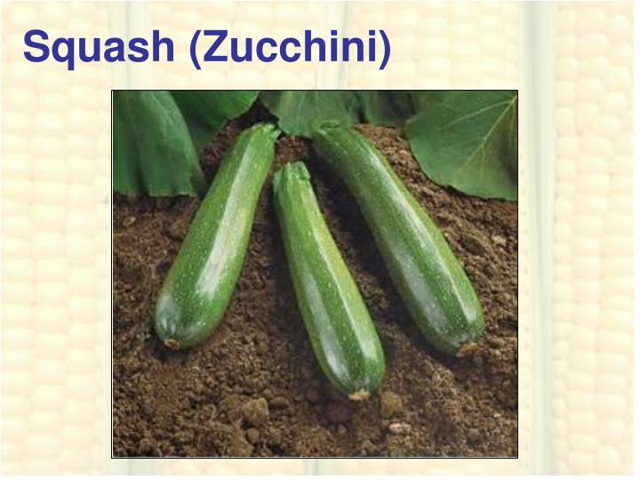 Squash (Zucchini)