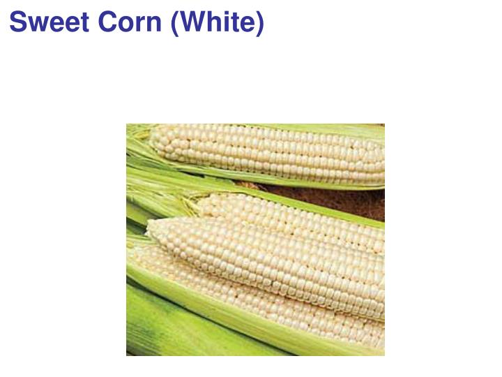 Sweet Corn (White)