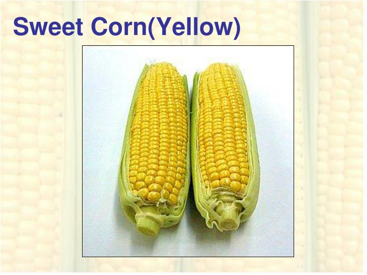 Sweet Corn(Yellow)