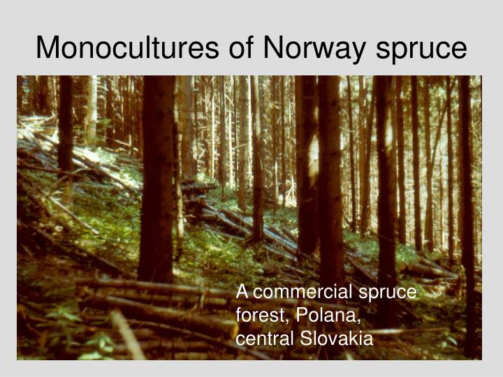 Monocultures of Norway spruce