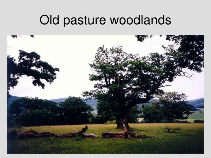 Old pasture woodlands