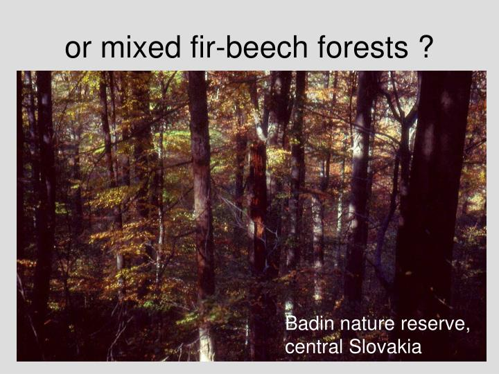 or mixed fir-beech forests ?