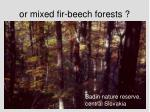 or mixed fir beech forests