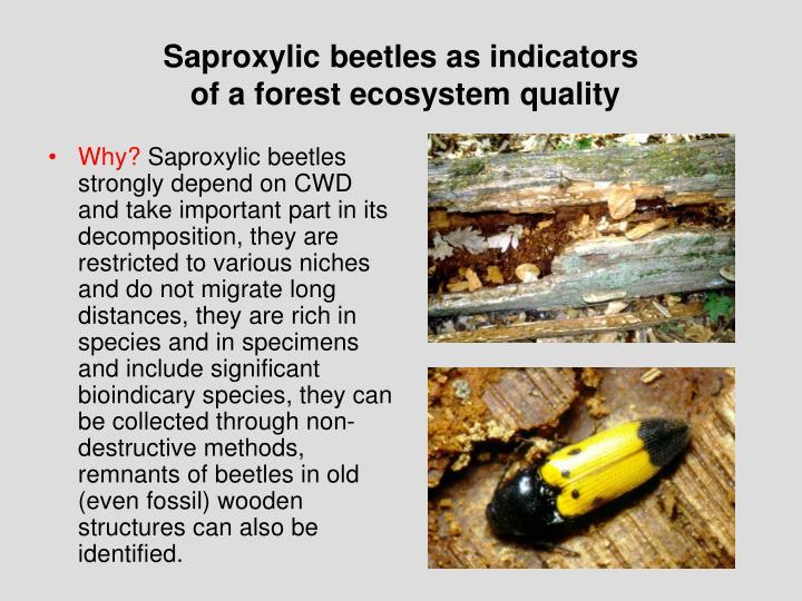 Saproxylic beetles as indicators