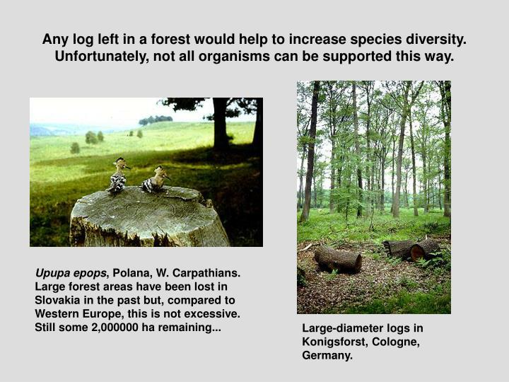 Any log left in a forest would help to increase species diversity. Unfortunately, not all organisms can be supported this way.