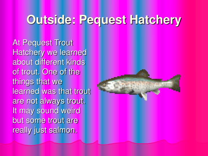 Outside: Pequest Hatchery