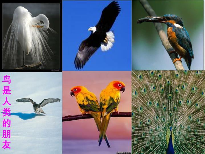 鸟是人类的朋友