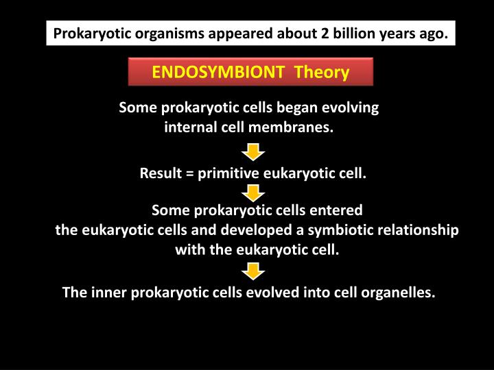 Prokaryotic organisms appeared about 2 billion years ago.