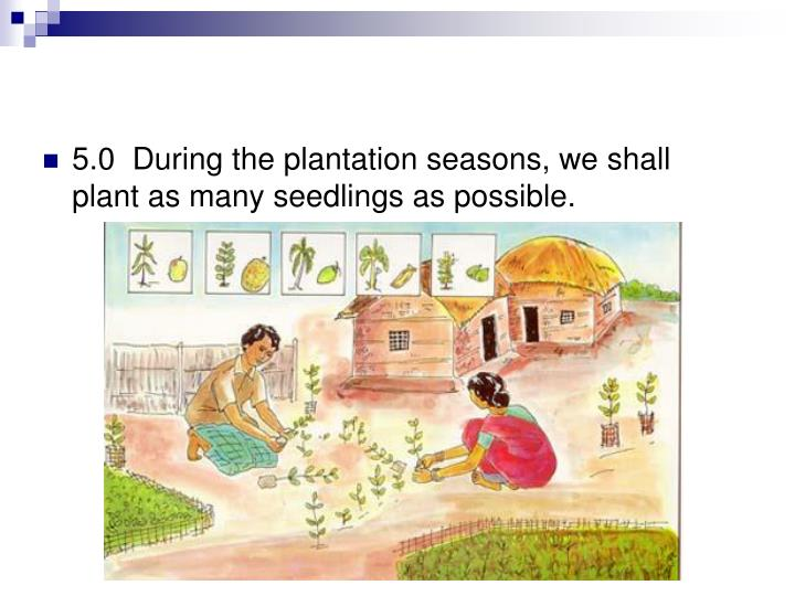 5.0  During the plantation seasons, we shall plant as many seedlings as possible.