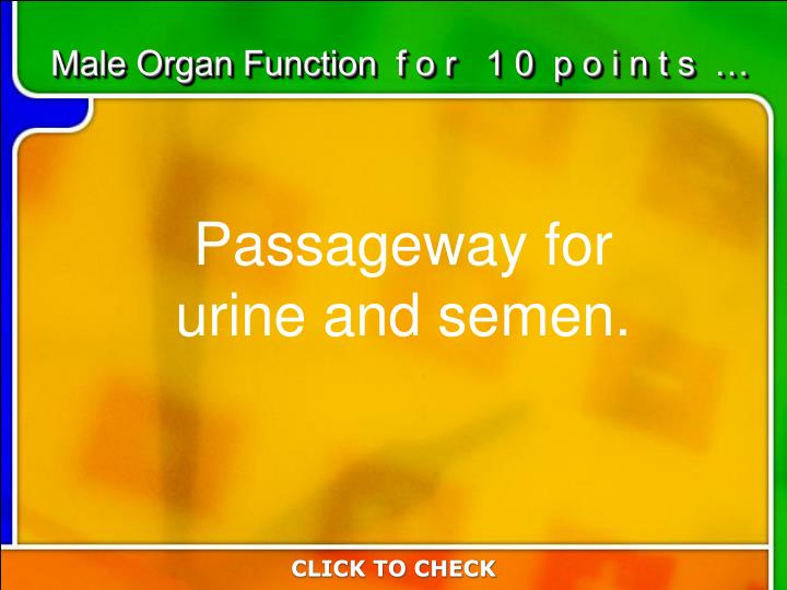 Male Organ Function  f o r   1 0  p o i n t s  …