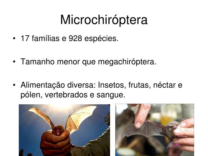 Microchiróptera