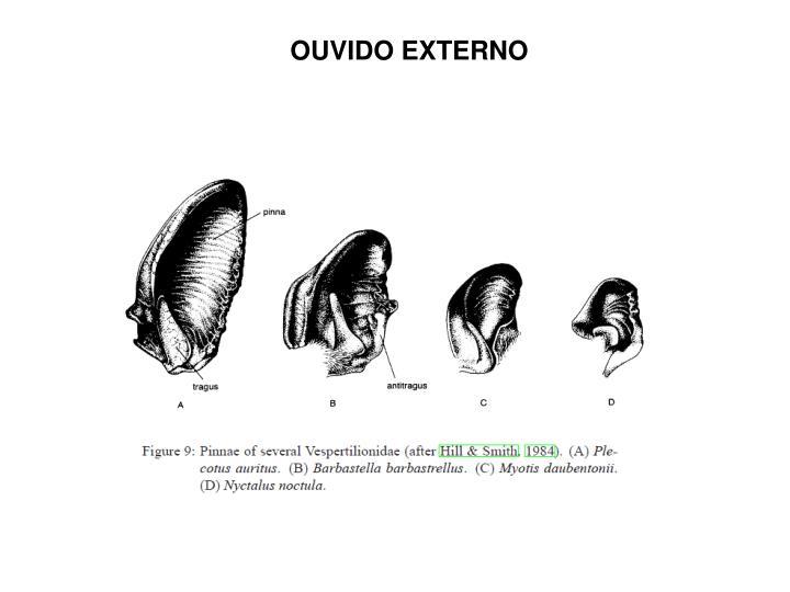 OUVIDO EXTERNO