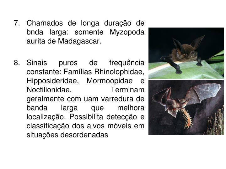 Chamados de longa duração de bnda larga: somente Myzopoda aurita de Madagascar.