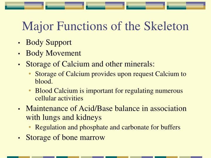 Major functions of the skeleton